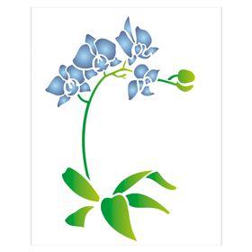 20x25-Simples-Phalaenopsis-OPA1454-Colorido